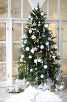 Conifer tree decorated for Christmas celebration
