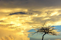 Dry tree during sunset with big clouds