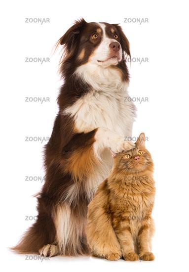 Hund und Katze sehen nach oben