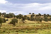 Ungezäuntes Weideland in der Extremadura