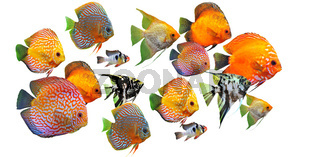 group of fishes
