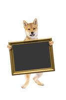 standing shiba inu puppy dog holding a placard or blackboard