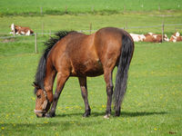 Pferde im Münsterland