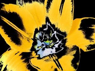 Tulpe abstrakt II