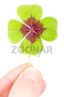 ein vierblättriges Kleeblatt zwischen zwei Fingern