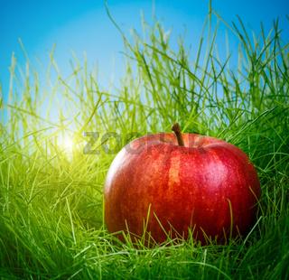 Apple on the grass