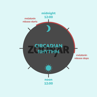 Circadian rhythm concept. Infographic of melatonin hormone release. Biological clock of humans. Biodynamics and light timing.