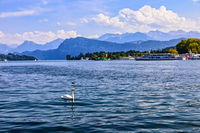 Sommerblick am Vierwaldstättersee, Schweizer