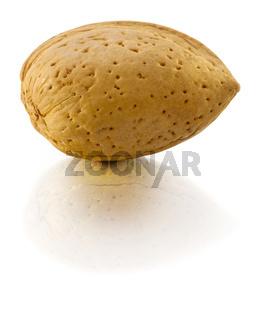 Almond in nutshell