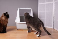 two domestic cats examining new closed cat litter box at home