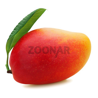 Fresh mango fruit isolated on white background.