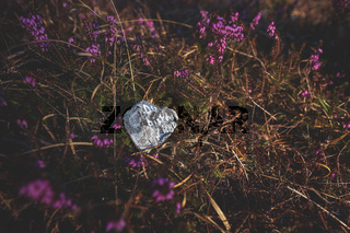 Stone with motivating German text 'You are the light' on forest floor covered with blooming spring heath