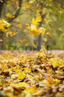 yellow fallen leaves fly in the autumn park. Idyllic scene in the afternoon in an empty park, selective focus