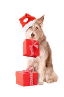 Dog with santa hat and presents