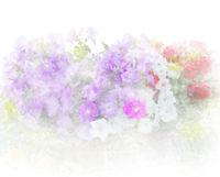 Petunia flowers watercolor painting