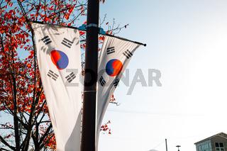 Korean national flag Taegeukgi with autumn maple in Miryang, Korea