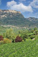 Kaltern an der Weinstrasse,Südtirol,Italien