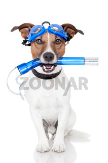 dog with snorkel