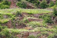 Aufgelassener Weinberg am Hang der Mosel