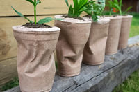 paper pots for flowers. Transplanting flowers.