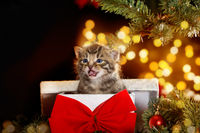kitten under the Christmas tree sits in a gift box