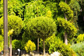 Closeup assortment of evegreen plants on sale