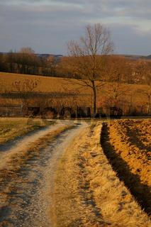 Feldweg und Baum im Winter