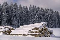 Die Holzstapel vor dem Winterwald