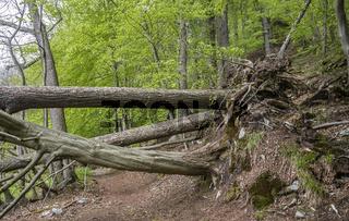 Der Waldweg ist versperrt...