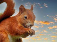 Eichhörnchen frisst Sonnenblumenkerne