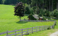 wooden fence between forest and meadow in the mountains