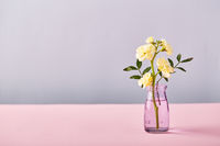 Flower of yellow matthiola in little glass vase. Design concept of holiday greeting on pink table