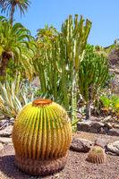 Garden of cacti