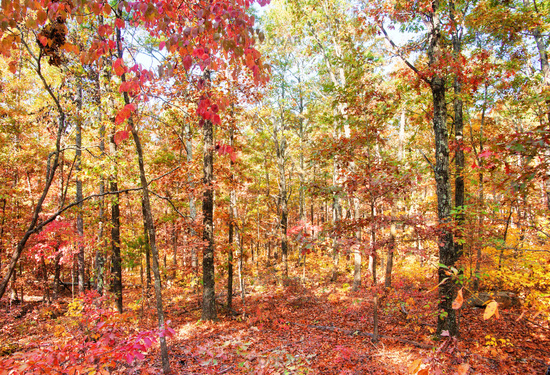 colors of autumn or fall in forest