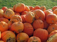 heap of pumpkins