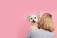 Cute dogs looks over the shoulder in front of pink background