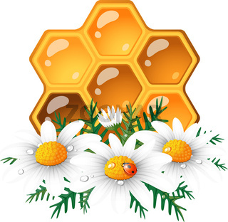 Honeycomb and daisy