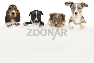 Various cute puppy dogs hanging over a white wooden board with space for text