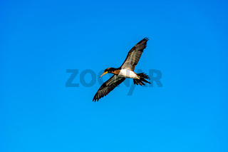 Seabird flying with open wings and sky