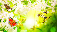 Beautiful branch of blossoming tree in spring with butterfly.