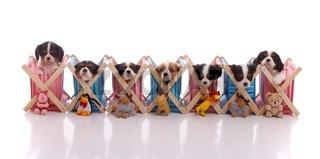 sieben Welpen mit Spielzeug