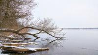 Winterlandschaft mit Bäumen an einem See bei Magdeburg