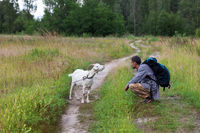 Young goat and man with backpack on meadow and dirt road in forest