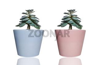 Zwei Pflanzen