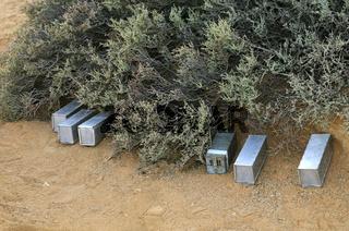 Metallboxen als Fallen zum Fang von Afrikanische Striemengrasmäusen im Rahmen eines Feldforschungsprojektes