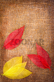 Grunge autumn background with leaves on canvas