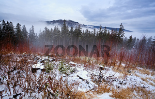 Harz mountains covered with snow