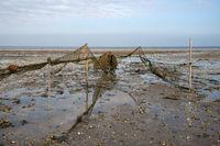Wadden Sea, Amrum, Germany