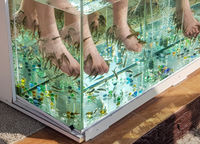 Close-up of an aquarium with Peeling of the skin of the feet of tropical fish in the water