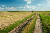 Rural road through farmland and clouds against the blue sky